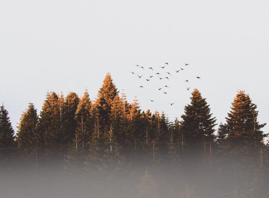 Slosy Herbst